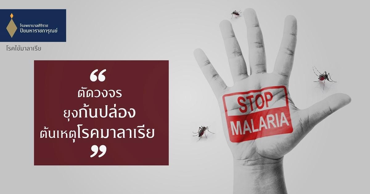 #ศูนย์อายุรกรรม #โรงพยาบาลศิริราช ปิยมหาราชการุณย์ #ไข้มาลาเรีย #ไข้มาลาเรียอาการ #ไข้มาลาเรีย คืออะไร #ไข้มาลาเรีย ติดต่อ #ไข้มาลาเรีย เกิดจาก #ไข้จับสั่น #ไข้ป่า #ไข้มาลาเรีย การป้องกัน #ยุงก้นปล่อง #ปวดเมื่อยตามตัวและกล้ามเนื้อ #Malaria